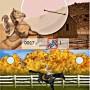 Addestramento al salto in My Horse & Me gioco per Nintendo DS