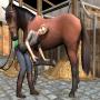 Riding Academy gioco di cavalli